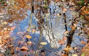 Природа: осень, лужа, листья, природа