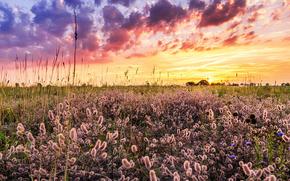 Пейзажи: закат, поле, пейзаж