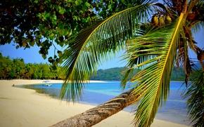 Природа: море, берег, пальма, природа