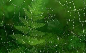 Макро: паутина, капли, роса, растения, макро
