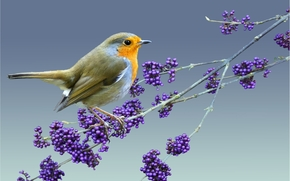Животные: птица, ветка, птица на ветке, природа