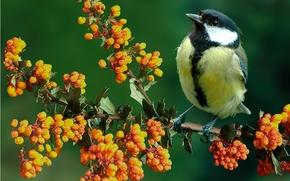 Животные: синица, птица, ветка, птица на ветке, природа