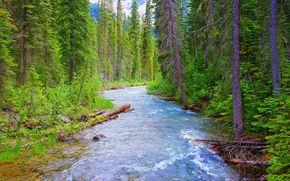 Пейзажи: Национальный парк йохо, британская Колумбия, река, лес, деревья, пейзаж