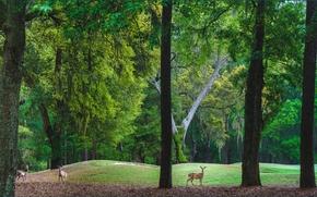 Пейзажи: парк, холмы, деревья, олени, пейзаж