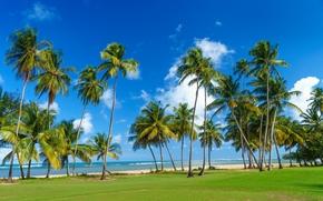 Пейзажи: Сан-Хуане, Пуэрто-Рико, море.берег, пальмы, пляж