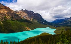 Пейзажи: Peyto Lake, Banff, Alberta, canada, озеро, горы, деревья, пейзаж