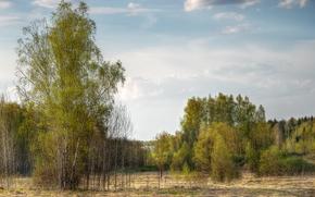 Пейзажи: поле, деревья, пейзаж