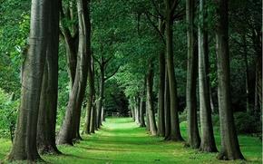 Пейзажи: аллея, газон, парк, деревья, пейзаж
