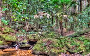Природа: Стрикленд Государственный заповедник, на Центральном побережье Нового Южного Уэльса, Австралия