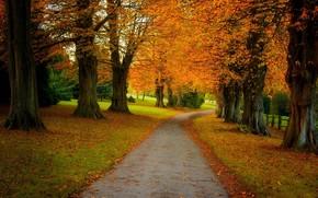 Пейзажи: осень, дорога, лес, парк, деревья, пейзаж