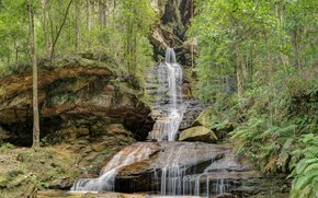 �������: Blue Mountains National Park, NSW, Australia, �������, �����, �������