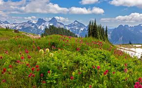 Пейзажи: Mount Rainier National Park, горы.деревья, цветы, пейзаж