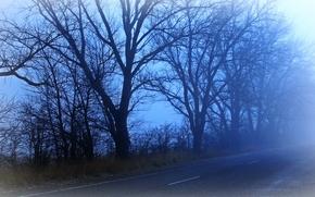 Пейзажи: дорога, рассвет, туман, деревья, пейзаж