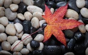 Макро: камни, осеннй лист, капли, макро