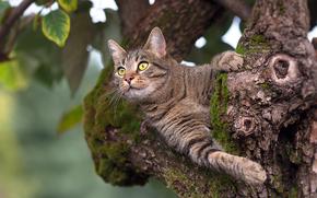 Животные: кот, кошка, дерево, на дереве