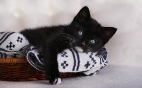 Животные: чёрный котёнок, голубые глаза, котёнок, взгляд