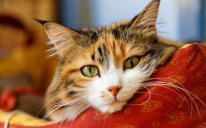 Животные: кот, кошка, морда, взгляд