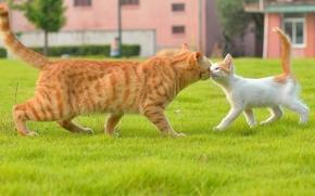 Животные: кот, кошка, котёнок, знакомство