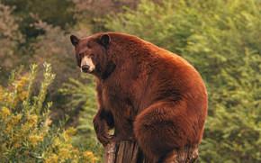 Животные: Барибал, медведь, пень