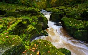 Пейзажи: River Wharfe, Strid Wood, Bolton Abbey, Wharfedale, Yorkshire Dales, North Yorkshire, England, Река Уорф, Стрид Вуд, Варфидейл, Аббатство Болтон, Йоркшир-Дейлс, Северный Йоркшир, Англия, река, камни, мох, осень