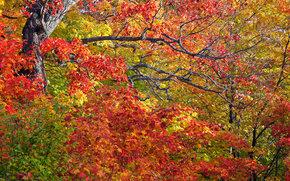 Природа: осень, деревья, ветки, листья