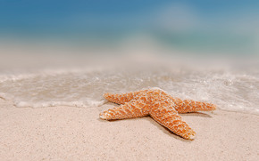 Природа: морская звезда, вода, песок