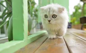 Животные: котёнок, пушистый, малыш