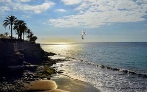 Пейзажи: Плайя эскондида, закат, море, берег, чайка, пейзаж