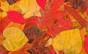 осень, листья, природа обои, фото