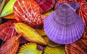 Макро: ракушки, разноцветные, крашеные