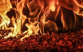 Макро: костёр, угли, пламя, огонь
