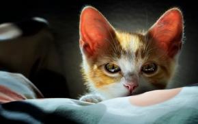 Животные: котёнок, мордочка, взгляд