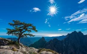 Пейзажи: Aiguilles de Bavella, Bavella Needles, Conca, Corsica, France, Иглы Бавеллы, Конка, Корсика, Франция, горы, дерево, небо, солнце