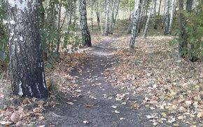 Природа: осенняя пора, тропинка, листья
