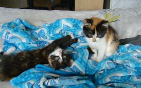 Животные: котята, малышки, подкидыши