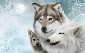 хищники, волки, art обои, фото