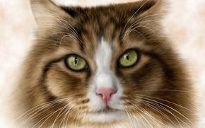 Животные: кот, кошка, art