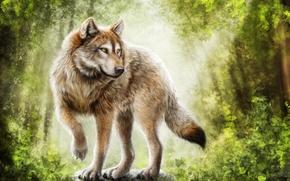 Рендеринг: волк, хищник, art