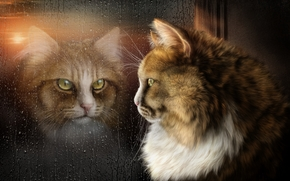 Рендеринг: котэ, отражение, окно, стекло, капли, art