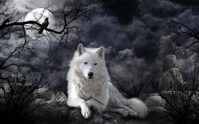 Рендеринг: ночь, луна, волк, art
