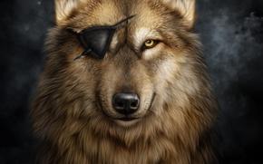 Рендеринг: волк, без глаза, art