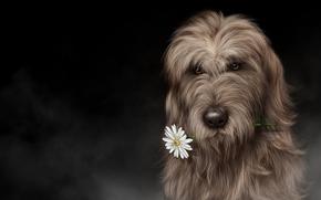 Рендеринг: Ирландский волкодав, art, собака