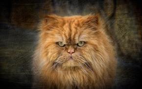 Животные: кот, котэ, взгляд