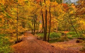 осень, дорога, лес, деревья, речка, мост, пейзаж обои, фото