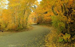 осень, лес, деревья, речка, пейзаж обои, фото
