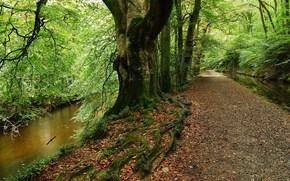 лес, дорога, деревья, речка, пейзаж обои, фото