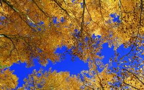 Природа: осень, деревья, небо, кроны, природа