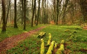 Пейзажи: лес, деревья, тропинка, пейзаж