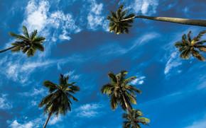 Пейзажи: небо, пальмы, облака, кроны, пейзаж