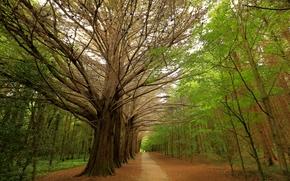 Пейзажи: парк, деревья, дорога, пейзаж